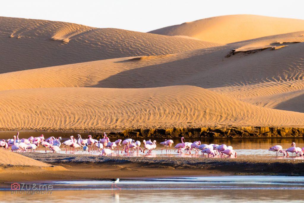 Flamingi przed WalvisBay